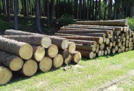 Prodej dřevní hmoty z těžby z městských lesů v lokalitě u Petrovic a Vysočina Arény u Nového Města na Moravě – srpen 2016
