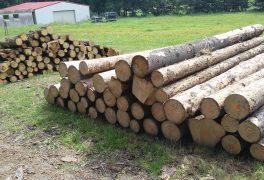 Poptávkové řízení na prodej dřevní hmoty z výchovné těžby a nahodilé těžby z městských lesů Nového Města na Moravě, odvozní místo u SKI hotelu