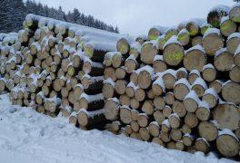 Poptávkové řízení na prodej dřevní hmoty znahodilé těžby z městských lesů v lokalitách Petrovice a les Ochoza (U Huberta) – leden 2018
